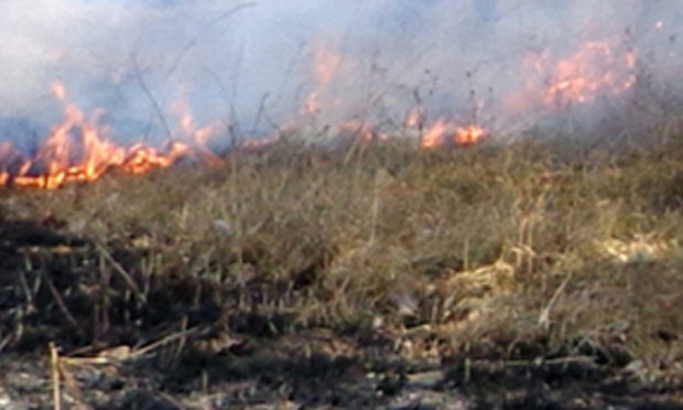 Forest fire line operation